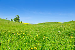 Pasture,trees,canola crops on the background of the blue sky Royalty Free Stock Photos