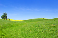 Pasture, trees, canola crops on the background of the blue sky. Royalty Free Stock Photography