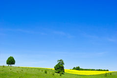 Pasture,trees,canola crops on the background of the blue sky. Stock Photo