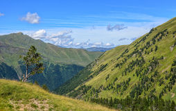 Pasture and trees in the Pyrenees mountain near Luchon Stock Photos