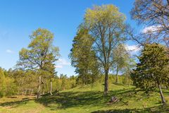 Pasture with trees at spring Royalty Free Stock Photos