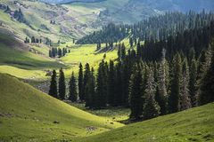 Pasture under the Sunshine Stock Photo