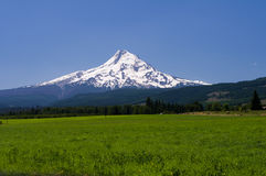 Pasture with view of Mt. Hood Stock Photography