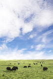 Pasture view Royalty Free Stock Images