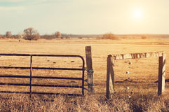 Pasture. Wood fence on summer pasture Stock Photos