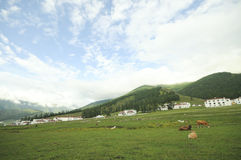 Pasture at xinjiang,china Royalty Free Stock Photos