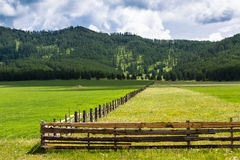 Pasture with yellow and green grass, separated by a fence. Stock Image