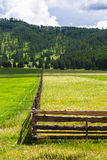 Pasture with yellow and green grass, separated by a fence. Royalty Free Stock Photos