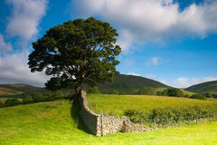 On the pasture in Yorkshire Dales National Park, Cumbria, Englan Stock Photos