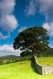 On the pasture in Yorkshire Dales National Park, Cumbria, England Royalty Free Stock Images