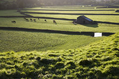 Pasture in Yorkshire Dales Yorkshire England Royalty Free Stock Photos