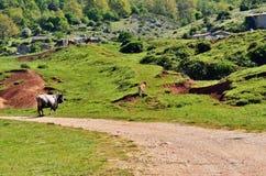 Pastureland Stock Image