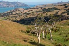 Pastures above Banks Peninsula Royalty Free Stock Photos