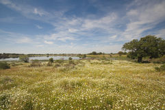 Pastures in Extremadura, Spain. Many oak trees and blue sky Royalty Free Stock Photography