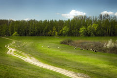 Pastures and forests in the village of Ivanovo, Stock Photos