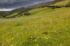 Pastures in the highlands of Ecuador Stock Photography