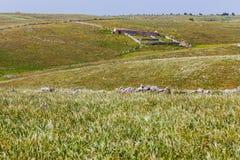 Pastures Stock Photo