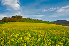 Pastures of Lucerne Royalty Free Stock Photos