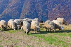 On pastures near the beautiful mountain peaks Stock Photography