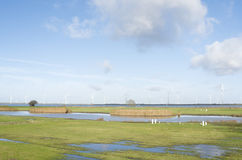 Pastures in The Netherlands. Royalty Free Stock Images