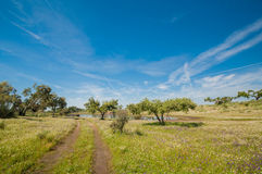 Pastures and pond in Extremadura, Spain. Many oak trees and blue sky Royalty Free Stock Images