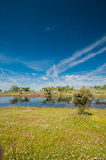 Pastures and pond in Extremadura, Spain. Many oak trees and blue sky Royalty Free Stock Image