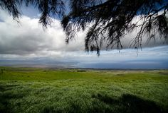 Pastures in shadows of ironwood trees on Kohala Mountain Road, W Stock Photo