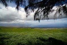 Pastures in shadows of ironwood trees on Kohala Mountain Road, W Stock Photo