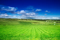 Pastures, sky and clouds. Wide green field, pastures, landscape Stock Photography