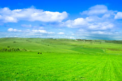Pastures, sky and clouds. Wide green field, pastures, landscape Royalty Free Stock Image