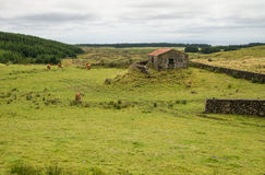 Pastures on Terceira island Royalty Free Stock Photography