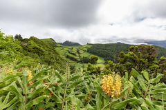 Pastures and tropical plants. On the rim of the Sete Cidades caldera on Sao Miguel royalty free stock images