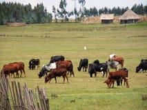 Pasturing herd Royalty Free Stock Photo