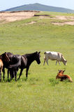 pastwiska Obraz Stock