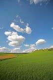 pastwiska zdjęcie royalty free