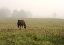 pastwiska koń. Obrazy Royalty Free