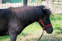 pastwiska koń Zakończenie konik Koń i zoo fotografia royalty free