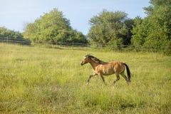 pastwiska koń Fotografia Stock