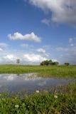 pastwiska koniczynowy Fotografia Stock