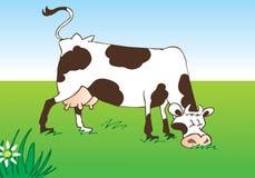 pastwiskowa krowy łąka obraz royalty free