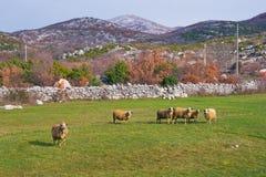 pastwiskowego krajobrazowego paśnika wiejscy cakle zgadzający się terenu teren kartografuje ważny ścieżki ulga cieniącego stan ot Fotografia Royalty Free