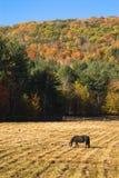 pastwiskowy koński idylliczny pióro Zdjęcia Stock