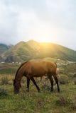 pastwiskowych koni krajobrazowa góra Obrazy Royalty Free