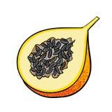 Pasyjnej owoc ręki rysować owoc odizolowywać royalty ilustracja