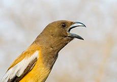Pasztetowy ptak obrazy royalty free