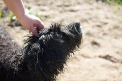Pat il cane fotografia stock