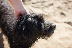 Pat il cane fotografie stock libere da diritti