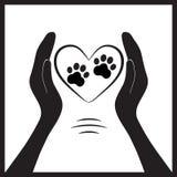 Pata animal do cão na mão dos povos Fotos de Stock