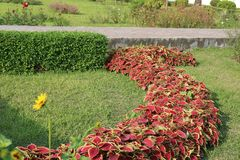 Pata Bahar - ζωηρόχρωμο βγάζει φύλλα τη γραμμή στον κήπο στοκ εικόνα με δικαίωμα ελεύθερης χρήσης