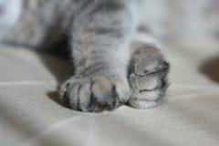 Pata del gatito Fotos de archivo libres de regalías